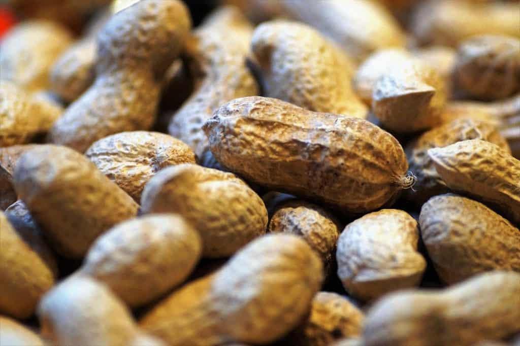 Inshell Peanuts, market report September 2020