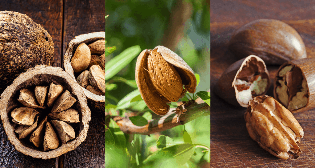 Edible nuts market update
