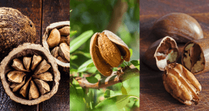 Edible nuts market update