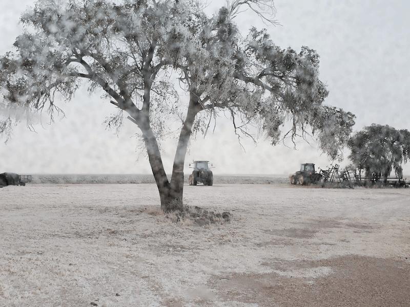 Freeze damage peanut harvest Texas