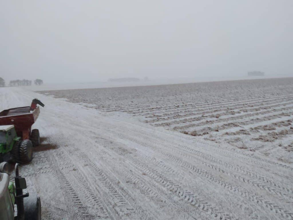 Arg peanuts snow