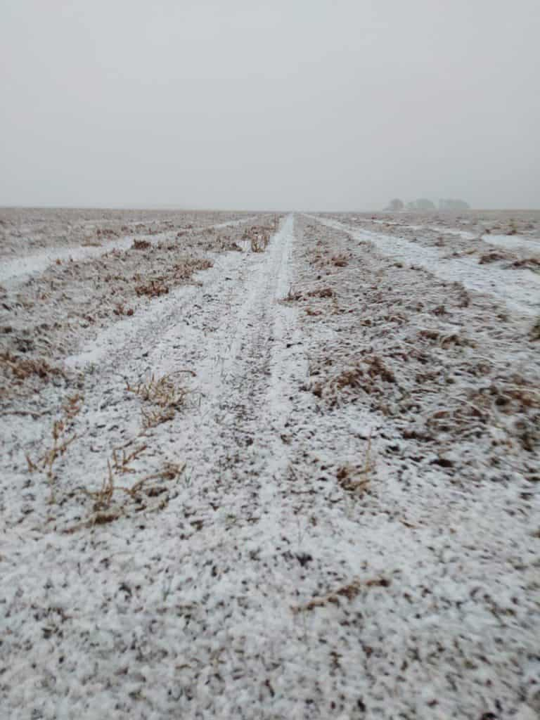 Snow in Arg peanut area