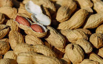 Peanuts Cornhouse